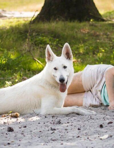 berger blanc suisse - white swiss shepherd
