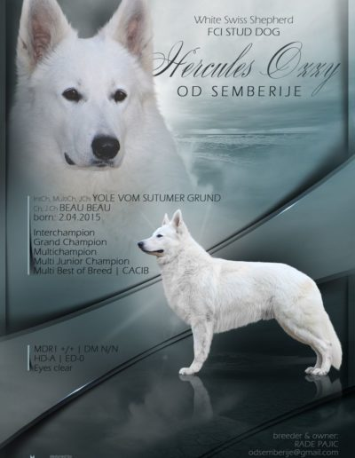 white swiss shepherd 27